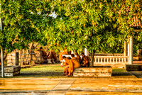 5 monks under a tree sunset