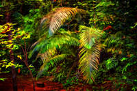 ferns in tropical foresst