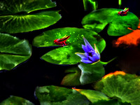 Blue Lotus 2 frogs and a waterbug impression