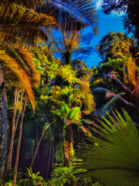 colorful tropical forest impression