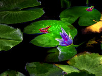 blue lotus with frogs impression