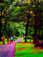walking thru the park lare evening sunset green grass families  impression